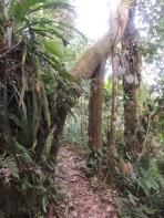 Une porte naturelle faite par un arbre