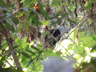 Aperçu d'un singe araignée dans la jungle